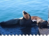 seals-on-dock-001
